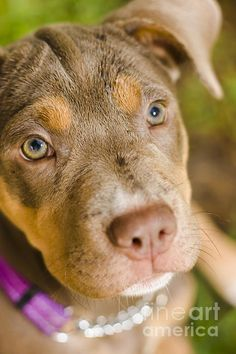 Close picture on the face of an adorable puppy dog sitting on green grass. Dog obedience training by Ryan Jorgensen