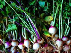 Think Ahead: What to Plant in Your Vegetable Garden this Fall