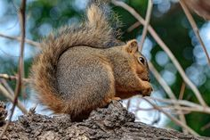Squirrel, San Diego Zoo | by daverodriguez
