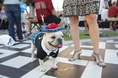 Yappy Hour @ Bell Tower Shops | news-press.com | Southwest Florida Volunteering & Causes | The News-Press