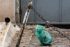 Emerald Green Cat Haunts Bulgarias Black Sea Coast