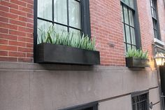 Need window boxes with succulents