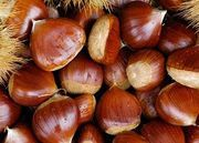 """Today, although the American chestnut is not technically extinct, few trees grow old enough to flower and reproduce. Any """"chestnuts roasting on open fires"""" today probably did not come from our native trees."""