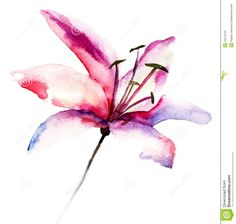 Similar Images, Stock Photos & Vectors of Decorative LIly flower, watercolor illustration - 204469879 Abstract Watercolor, Watercolor Illustration, Watercolor Flowers, Watercolor Tattoos, Abstract Tattoos, Geometric Tattoos, 1 Tattoo, Owl Tattoos, Space Tattoos