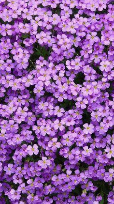 Ideas for purple aesthetic wallpaper flower Lavender Aesthetic, Flower Aesthetic, Purple Aesthetic, Aesthetic Outfit, Aesthetic Hair, Aesthetic Bedroom, Aesthetic Makeup, Purple Flowers Wallpaper, Blue Flowers