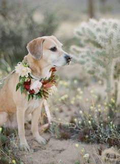 Moxie is really for her close up! http://www.stylemepretty.com/little-black-book-blog/2016/10/27/relaxed-engagement-shoot-joshua-tree-national-park/ Photography: Greg Finck - http://www.gregfinck.com/
