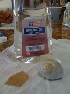 How to Clean Shells you Find on the Beach or in the Ocean | Readings From the Northside