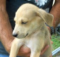 Noel is one of the 10 week old NO pups. They are sweet and looking for a good home.