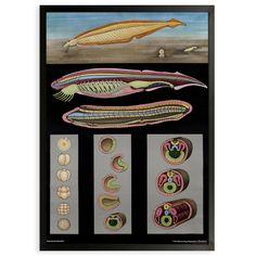 Fab.com | Lancelet Framed Print