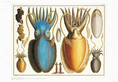 Albertus Seba's Amazing Cabinet Of Natural Curiosities