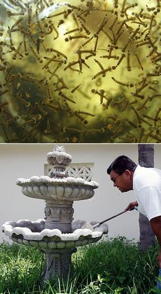 you have mosquitoes breeding in your fountain here is how you can i get rid of them. Use baking soda, the baking soda smothers the larve and wont allow them to hatch. We use baking soda in the w… Mosquitos, Outdoor Projects, Garden Projects, Dream Garden, Garden Art, Garden Pond, Diy Jardin, Mosquito Larvae, Backyards