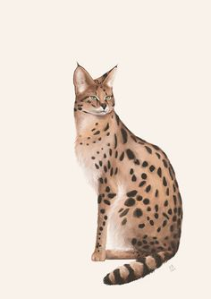 The Beautiful Serval Cat Serval Cats, Siamese Cats, Big Cats, Cats And Kittens, Cat Brain, Cat In Heat, Herding Cats, Simple Artwork, Cat Colors