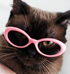 Ashleigh felt quite sassy in her fashionable pink spectacles.