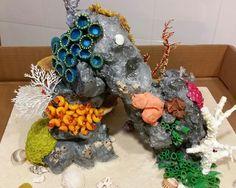 Maqueta corales marinos hecho con materiales de casa: pan rallado, fideos, semillas, telgopor,  ramitos,  papel maché. ....