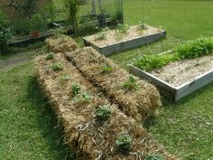 Strawbale Gardening - no weeding, no hoeing, no tilling - Page 53 - 4042.com Forums