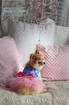 Blue and Pink Dog Tutu Harness Dog Dress by KOCouture on Etsy Cute Puppies, Cute Dogs, Dogs And Puppies, Doggies, I Love Dogs, Puppy Love, Dog Tutu, Puppy Clothes, Pet Fashion