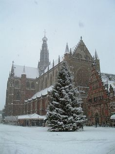 Christmas Tree in Snowy Haarlem, Netherlands. Haarlem Netherlands, Kingdom Of The Netherlands, Gouda, Beautiful Architecture, Culture Travel, Best Cities, Winter Scenes, Great Pictures, Homeland