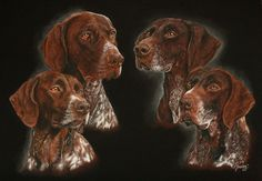 4 German Shorthaired Pointers (top right is National Champion of breed and working dog)