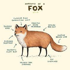 Anatomía de un zorro  solo para zorro Lovers! #zorros #animales #anatomia