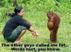 Orang Utan took the last banana Primates, Animals And Pets, Baby Animals, Funny Animals, Cute Animals, Wild Animals, Animal Babies, Beautiful Creatures, Animals Beautiful