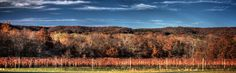 Fascinating Facts About American Viticulture Areas (AVA)- The Oldest AVA: Augusta in Missouri! (scheduled via http://www.tailwindapp.com?utm_source=pinterest&utm_medium=twpin&utm_content=post717943&utm_campaign=scheduler_attribution)