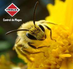 ¿Cómo atraen las plantas a la abeja?  Las plantas necesitan de las abejas y otros insectos para reproducirse y por lo tanto se han adaptado para atraerlos, de modo que han generado mecanismos que las hacen más atractivas para ellas.