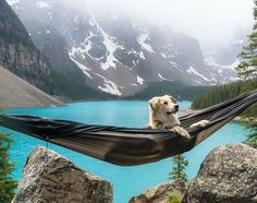 Dogs love hammocking, too. For real though, this thing is super comfortable 🌲