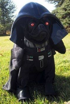 Pug Vader- ahhhhhhhhh! It has red eyes!!!