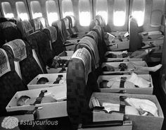 """Photo: Robert Stinnett / Oakland Tribune, April This was part of the orphan airlift, called """"Operation Babylift"""" from Vietnam to the US that took place in primarily by World Airways. Via The Oakland Tribune Collection, the Oakland Museum of California South Vietnam, Vietnam War, Photos Du, Old Photos, Oakland Tribune, Oakland Museum, Rare Historical Photos, We Are The World, Salvador Dali"""