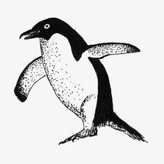 A penguin for my dailydrawing 49   #drawing #ink #inkdrawing #bird http://ift.tt/2fpuJTO A penguin for my dailydrawing 49  drawing ink inkdrawing tumblr bird