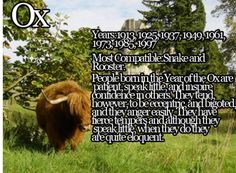 What's up, Zodiac? Chinese Astrology: The Ox