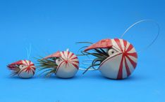 We bet the folks in the invertebrate paleontology department at the Sam Noble Oklahoma Museum of Natural History would LOVE these nautilus air planters!