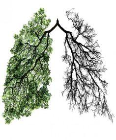 pulmão verde tumblr - Pesquisa Google