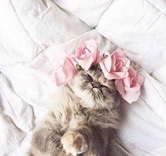 Uma segunda-feira gatinha