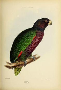 v.2 (1844-1849) - The genera of birds : - Biodiversity Heritage Library