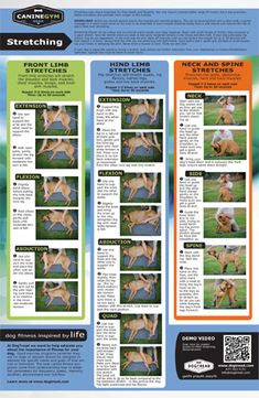 Flexibility: Stretching Safely with Your Dog  #DogStretch #DogTread #DrWorener