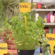 Ako vypestovať doma bylinky