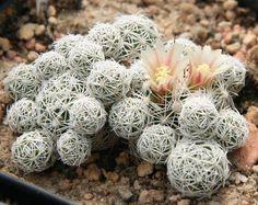 Sustrato para plantas suculentas delicadas