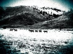 Black and White Kissing Horses in a Snowey Field, Landscape Abstract Photography - Kissing Horses on Etsy, $30.00