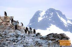 Penguins on Half Moon Island, Antarctica