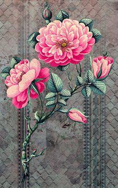 28 Ideas flowers acuarela wallpaper for 2019 Folk Art Flowers, Botanical Flowers, Vintage Flowers, Flower Art, Wall Flowers, Trendy Wallpaper, Flower Wallpaper, Pattern Wallpaper, Flower Backgrounds