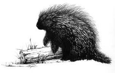 porcupine illustrations - Google Search