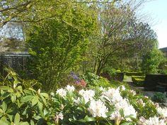 Van voor na achteren staan de bomen: Ginkgo biloba 'Japanse notenboom', Acer, Krentenboom, Magnolia 'Susan' en de Acer negundo 'Flamingo' 4-5-2016.