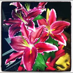 Lilly's from my love! Our Valentines day!