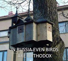 In Russia even birds Orthodox