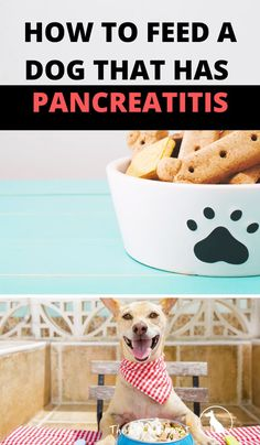 Here's what I feed my dog with pancreatitis. #pancreatitis #pancreatitisinogs #ibdindogs #caninepancreatitis What To Feed Dogs, Canine Pancreatitis, Dog Eating, Pet Health, Dog Care, Dog Owners, Dog Bowls, Dachshund, Fur Babies