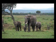 Camelback Odyssey Travel's President & Owner, Shelby Donley, trip to Kenya!  azredbook.com