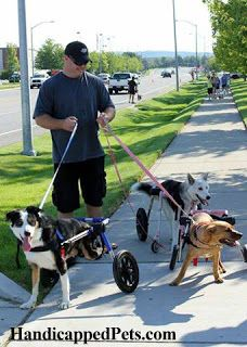 Handicapped Pets: Top Five Reasons to Vote for Walkin' Wheels to Get on the Shelf