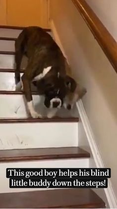 Cute Dogs And Puppies, I Love Dogs, Doggies, Cute Funny Dogs, Cute Funny Animals, Cute Animal Videos, Cute Animal Pictures, Dog Videos, Animal Jokes