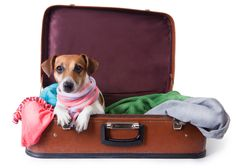 Planning an adventure with your dog but having a hard time finding dog-friendly hotels? In our recent article, we share the top dog-friendly hotels that are sure to give your fur buddy the star treatment. Read it here. Pet Friendly Cabins, Dog Friendly Hotels, Pet Friendly Accommodation, Air Travel Tips, Packing List For Travel, Dog Travel, Ask A Vet, Dog Hotel, Gatlinburg Cabins